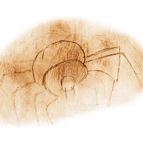 Zoom sur Le livre de l'araignée